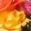 予算別1万円〜の花